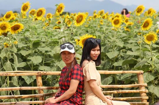 Phát sốt với vườn hoa hướng dương mới xuất hiện ở Quảng Nam - Ảnh 20.