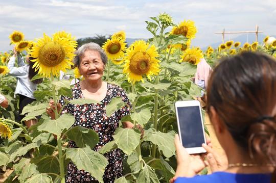 Phát sốt với vườn hoa hướng dương mới xuất hiện ở Quảng Nam - Ảnh 21.