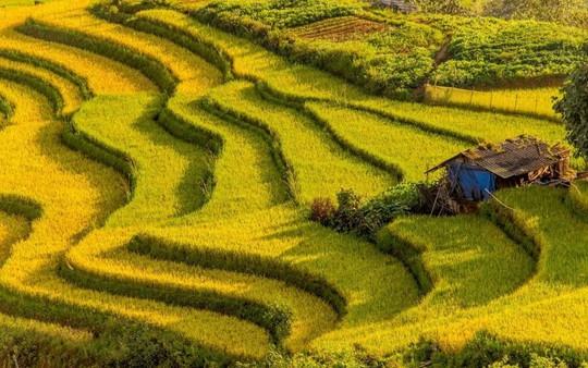 7 cung đường lúa chín ngoạn mục để săn ảnh mùa vàng - Ảnh 1.