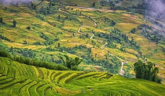 7 cung đường lúa chín ngoạn mục để săn ảnh mùa vàng - Ảnh 2.