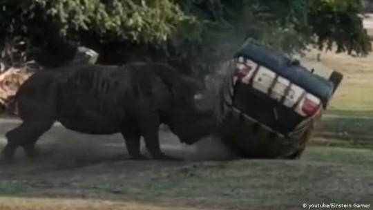 Tê giác tức giận hất tung xe hơi 3 lần ở Đức - Ảnh 1.