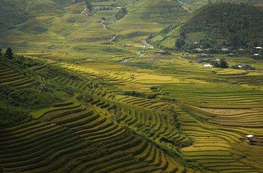 7 cung đường lúa chín ngoạn mục để săn ảnh mùa vàng - Ảnh 3.