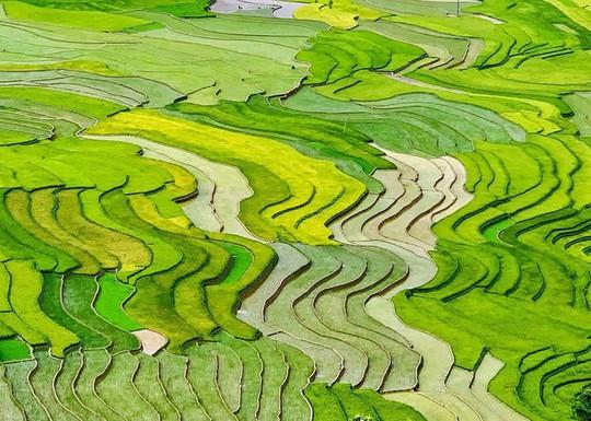 7 cung đường lúa chín ngoạn mục để săn ảnh mùa vàng - Ảnh 4.