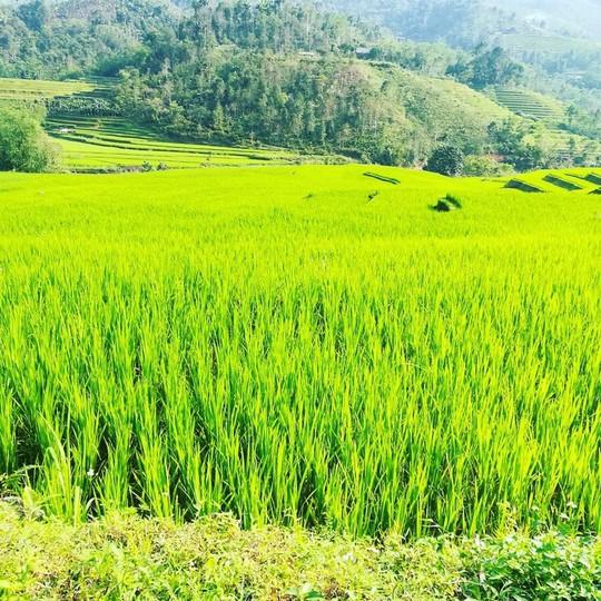 7 cung đường lúa chín ngoạn mục để săn ảnh mùa vàng - Ảnh 6.