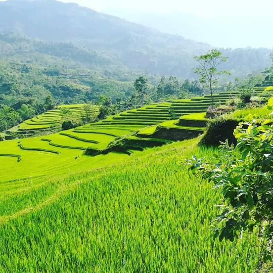 7 cung đường lúa chín ngoạn mục để săn ảnh mùa vàng - Ảnh 7.