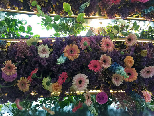 Khu vườn cổ tích với 15.000 bông hoa treo ngược - Ảnh 3.