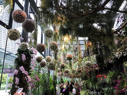Khu vườn cổ tích với 15.000 bông hoa treo ngược - Ảnh 4.