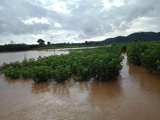 Lâm Đồng: Một Công an viên đi cứu hộ bị nước lũ cuốn trôi - Ảnh 5.