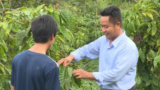 Nông dân lo lắng vì cà phê vàng lá, rụng quả sau khi sử dụng phân bón - Ảnh 2.