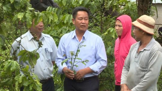 Nông dân lo lắng vì cà phê vàng lá, rụng quả sau khi sử dụng phân bón - Ảnh 3.