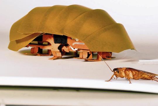 Mỹ - Trung chế robot giống con vật tồn tại lâu hơn khủng long - Ảnh 2.