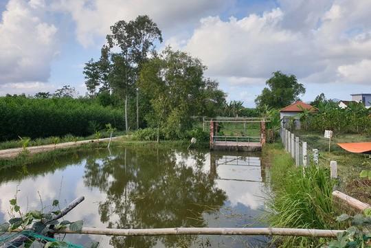 Ngôi nhà như cánh diều giữa vườn cây Đà Nẵng - Ảnh 9.