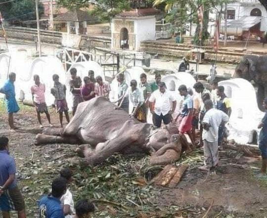 Con voi gầy trơ xương qua đời sau 70 năm làm nô lệ - Ảnh 1.