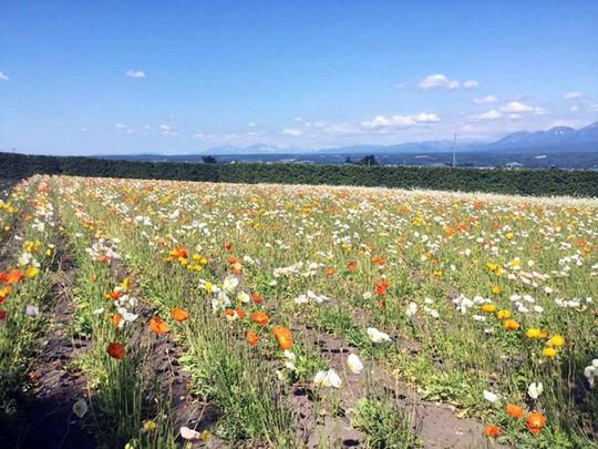 Khám phá đảo Hokkaido, nơi tuyết rơi mùa hè - Ảnh 6.