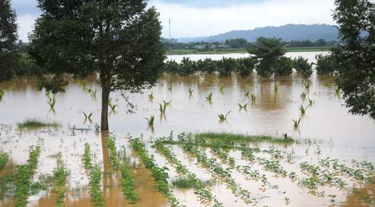 Lâm Đồng: Cây gãy đổ, ngập lụt, sạt lở đất nhà tốc mái la liệt do mưa bão - Ảnh 1.