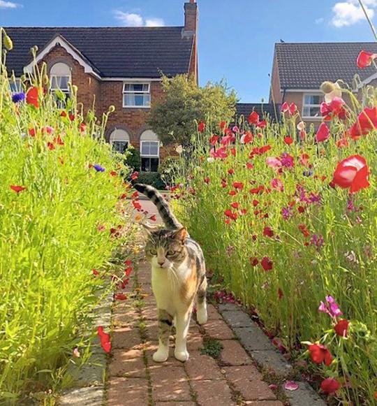 Người đàn ông biến bãi cỏ trước nhà thành cánh đồng hoa - Ảnh 5.