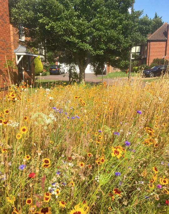 Người đàn ông biến bãi cỏ trước nhà thành cánh đồng hoa - Ảnh 8.