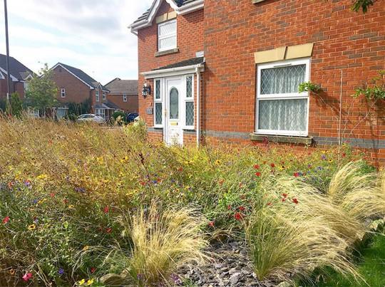 Người đàn ông biến bãi cỏ trước nhà thành cánh đồng hoa - Ảnh 9.