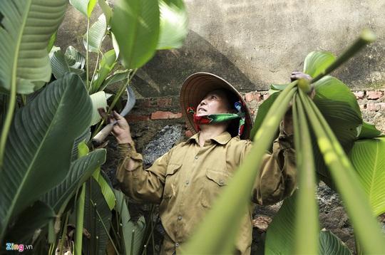 Người vùng trồng lá dong lớn nhất Hà Tĩnh trúng mùa - Ảnh 2.