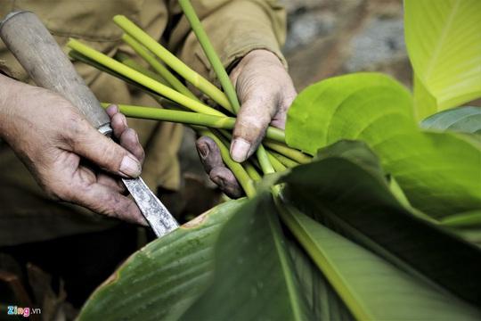 Người vùng trồng lá dong lớn nhất Hà Tĩnh trúng mùa - Ảnh 3.