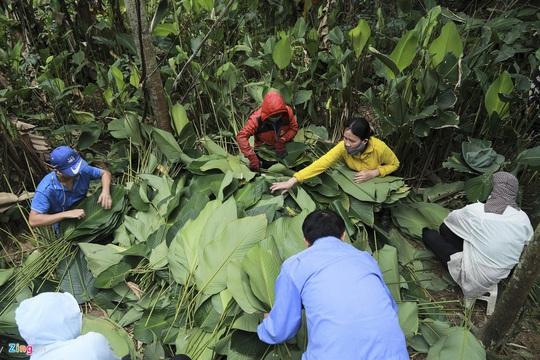 Người vùng trồng lá dong lớn nhất Hà Tĩnh trúng mùa - Ảnh 7.