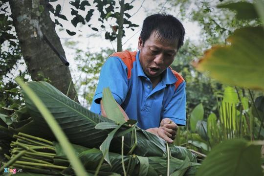 Người vùng trồng lá dong lớn nhất Hà Tĩnh trúng mùa - Ảnh 8.