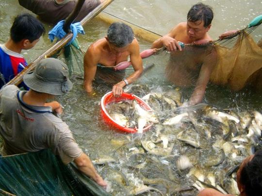 Cá ngập chà ở Cồn Sơn ngày giáp Tết, nhảy đầy mặt sông - Ảnh 1.
