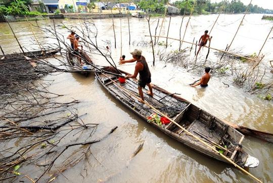 Cá ngập chà ở Cồn Sơn ngày giáp Tết, nhảy đầy mặt sông - Ảnh 2.