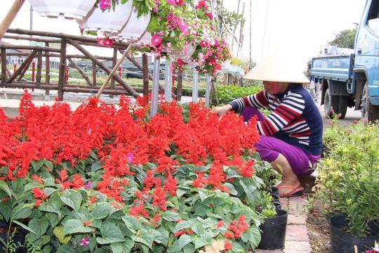 Nhiều chủng loại hoa mới, lạ ở Sa Đéc tấp nập lên phố - Ảnh 2.