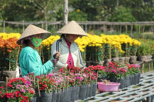 Nhiều chủng loại hoa mới, lạ ở Sa Đéc tấp nập lên phố - Ảnh 6.