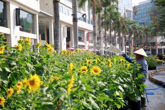 6 bông lúa siêu to tại Đường Xuân Phú Mỹ Hưng - Ảnh 7.