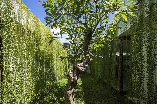 Nhà hộc kéo được bao phủ bởi 60% cây xanh và mặt nước - Ảnh 9.