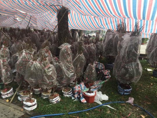 Chợ hoa Tết ở TP HCM đồng loạt mở cửa sáng 23 tháng Chạp - Ảnh 3.