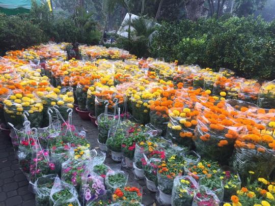 Chợ hoa Tết ở TP HCM đồng loạt mở cửa sáng 23 tháng Chạp - Ảnh 5.