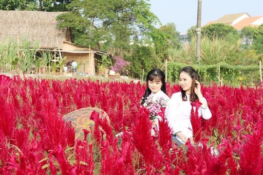 Về Cao Lãnh ngắm cánh đồng hoa rộng hơn 20.000 m2 - Ảnh 1.