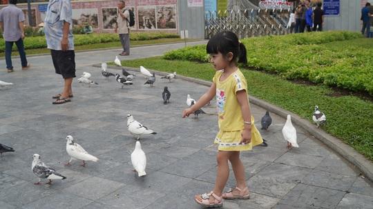 Gần 1.000 chim bồ câu nhuộm màu ở Nhà thờ Đức Bà - Ảnh 7.