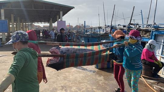 Ngư dân Phú Yên mỏi tay khiêng cá ngừ đại dương - Ảnh 3.