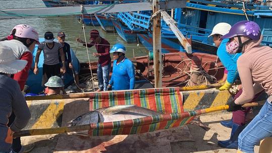 Ngư dân Phú Yên mỏi tay khiêng cá ngừ đại dương - Ảnh 2.