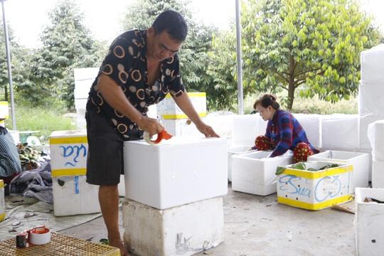 Phát thèm với vú sữa đạt chuẩn VietGAP mùa Tết ở Cần Thơ - Ảnh 5.