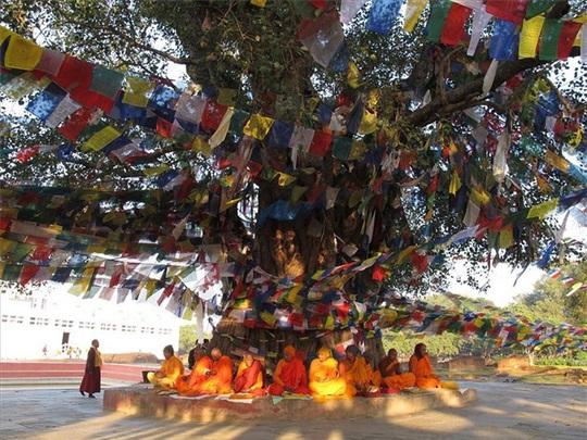 Khám phá đất Phật Ấn Độ - Ảnh 2.