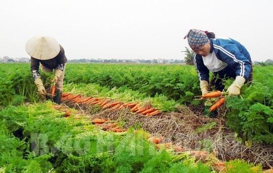 Mỗi năm chia nhau gần 6.000 tỉ đồng, làng tỉ phú hiếm có ở Việt Nam - Ảnh 2.