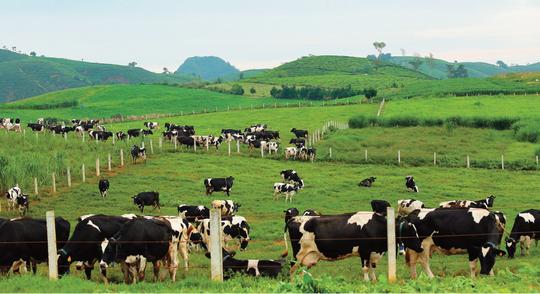 Nhân sự Vinamilk tham gia quản lý Bò sữa Mộc Châu và GTNfoods - Ảnh 1.