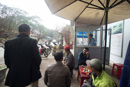 CLIP: Chậu đào Long quyện ngũ hành sơn tiền tỉ trên phố Hà Nội - Ảnh 10.
