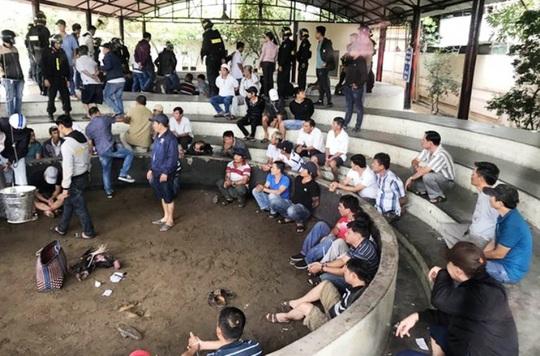 Bắt giam 13 đối tượng sát phạt tại trường gà lớn chưa từng có ở Phú Yên - Ảnh 1.