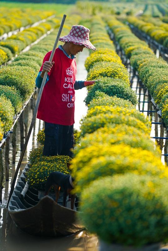 Vườn cúc Sa Đéc rợp sắc vàng những ngày cuối năm - Ảnh 6.