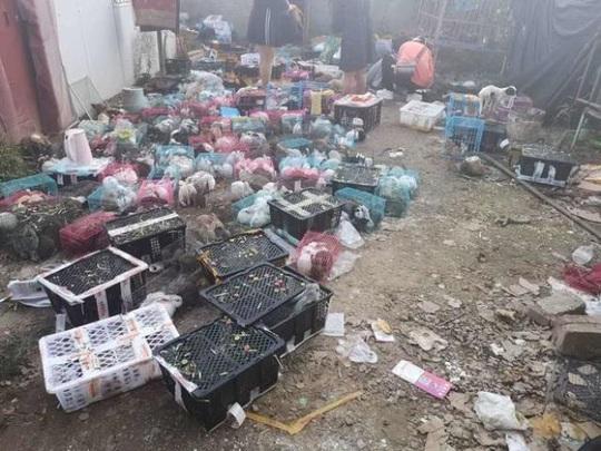 Thảm cảnh của 5.000 thú nuôi chết trong thùng hàng chuyển phát tại Trung Quốc - Ảnh 3.