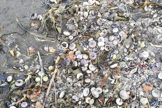 Nguyên nhân nào gây thảm hoạ sinh thái Kamchatka ở Nga? - Ảnh 1.