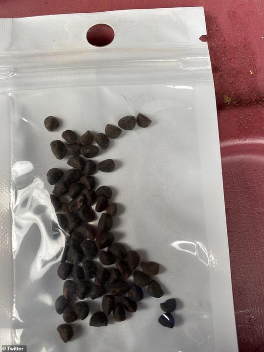 Chiêu trò đằng sau hạt giống bí ẩn gieo rắc hoang mang ở Mỹ - Ảnh 2.