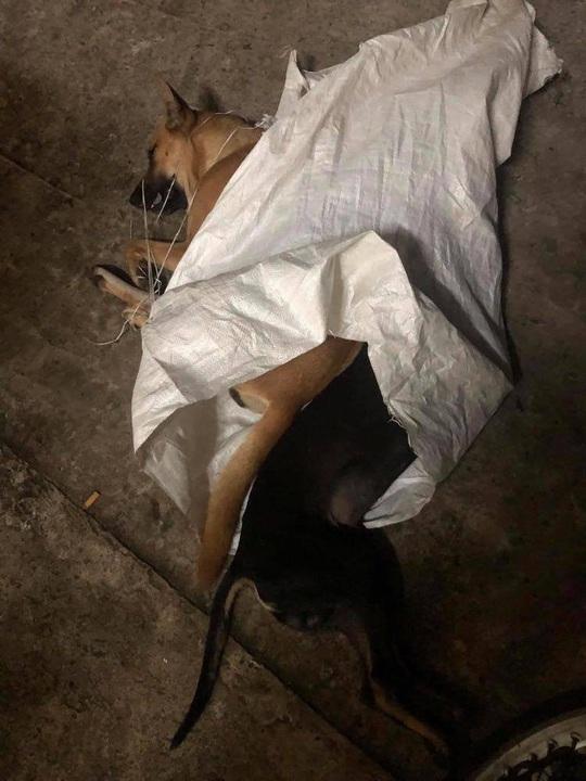 Bắt 2 đối tượng xăm trổ trộm chó chống trả người truy bắt - Ảnh 2.