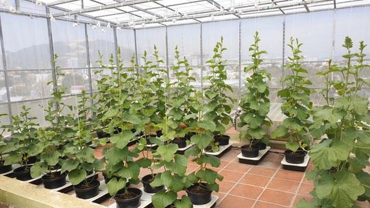 Gia đình trẻ biến sân thượng trống thành 'khu vườn trên mây' - Ảnh 3.